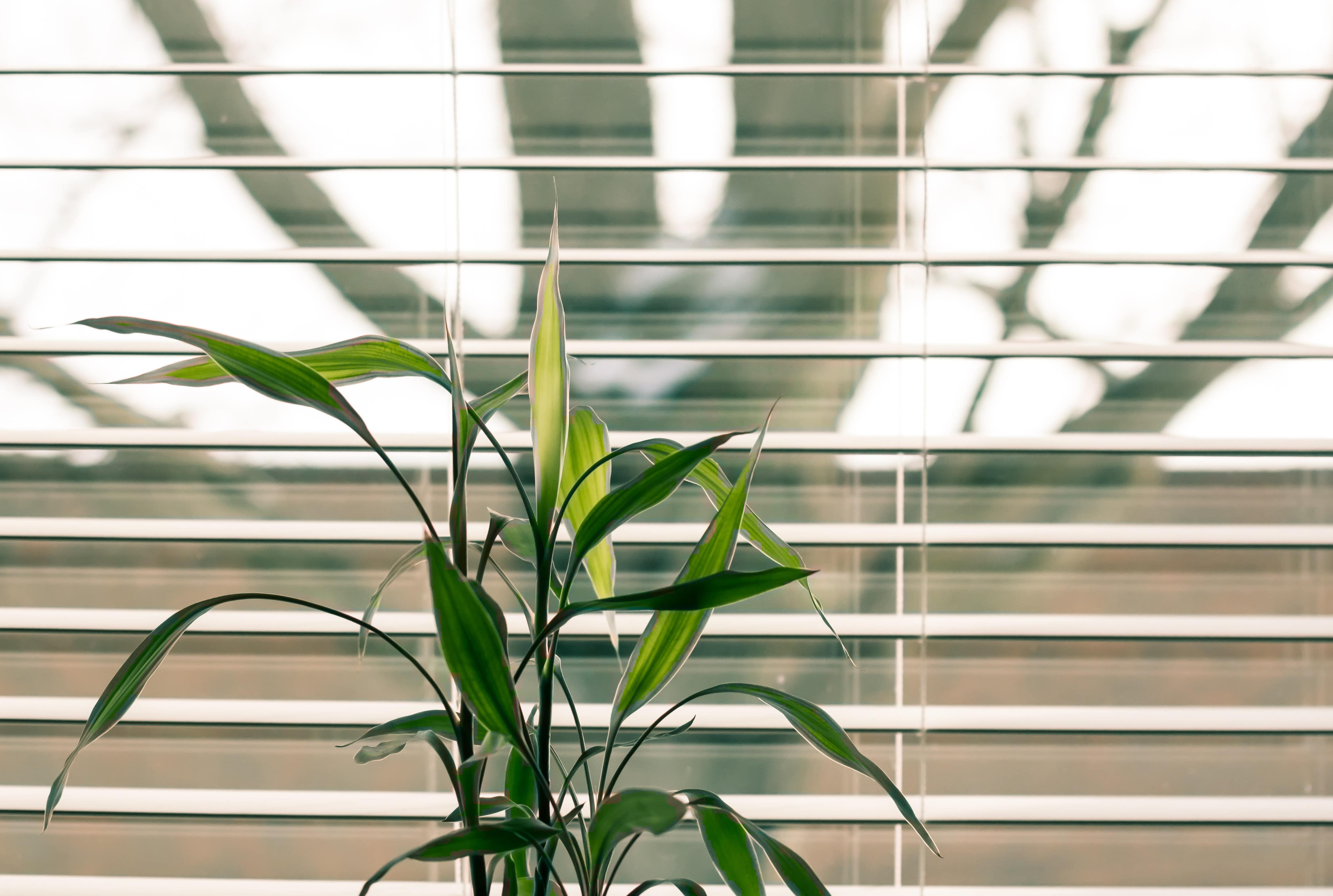 image of plant in front of dusty blinds