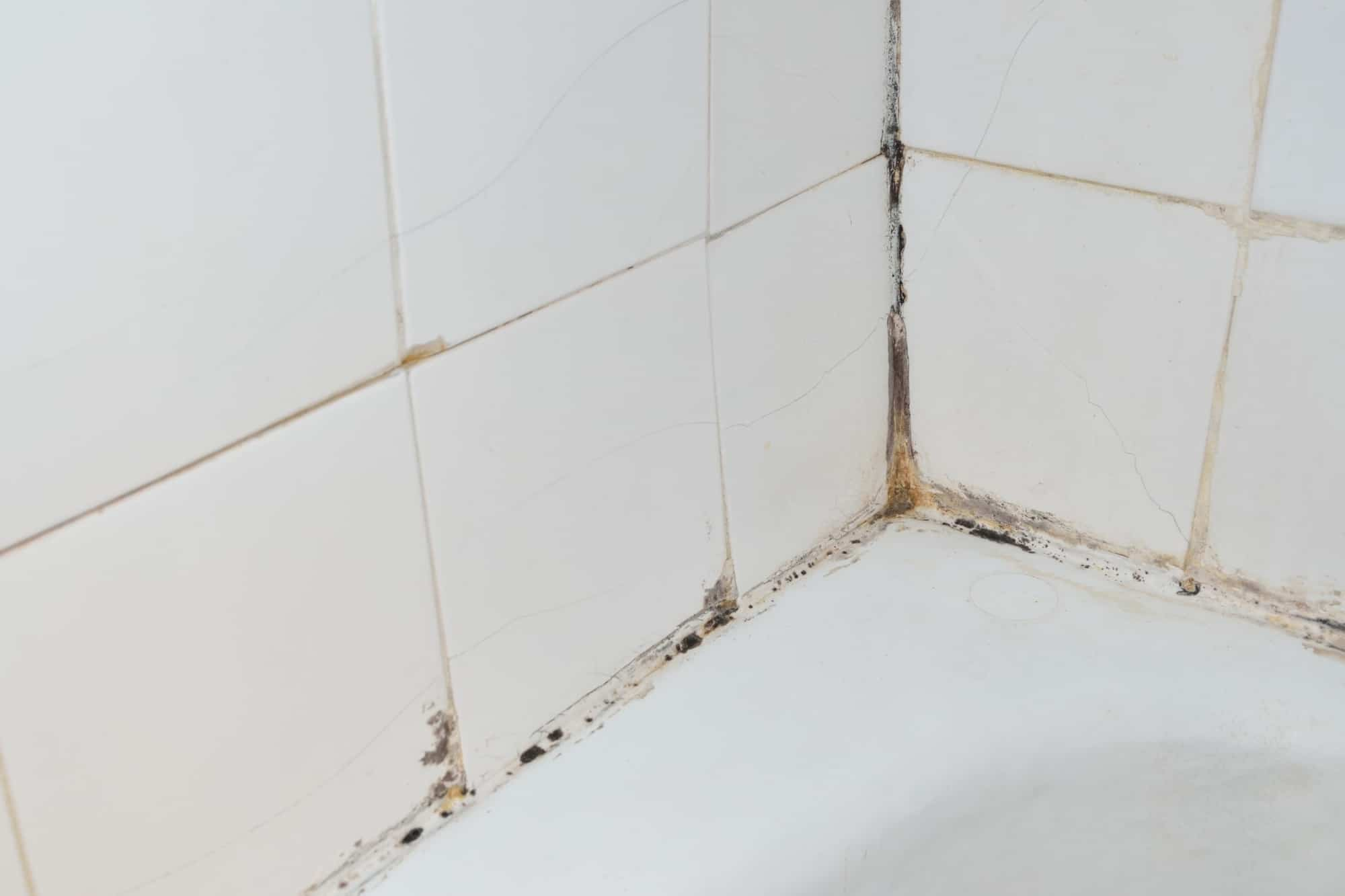 How to Get Rid Of the Mold in Your Shower